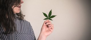 cannabis hero