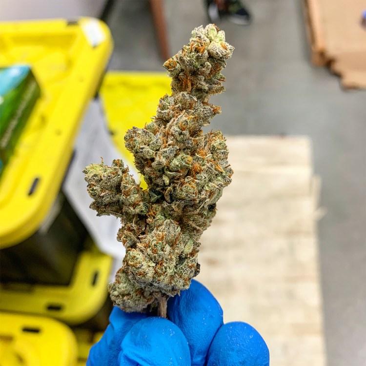asterisk cannabis