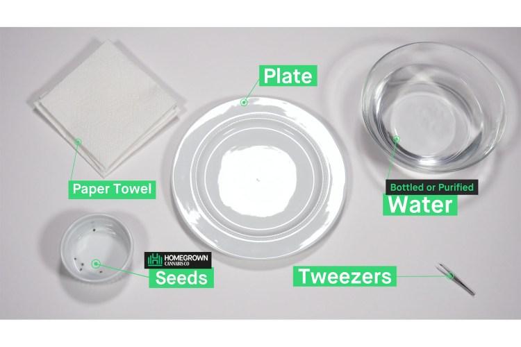 germination 0005 HMG GERMINATION 0