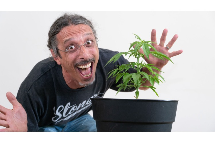 how to grow cannabis 0007 kyle kushman image 1