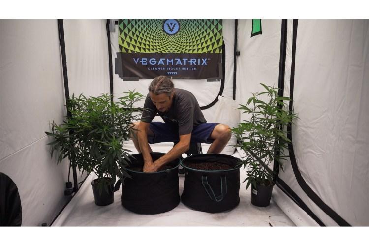 how to grow cannabis 0008 kyle kushman 5