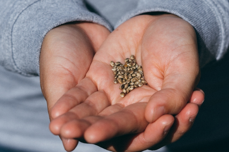 homegrown cannabis hacks 0005 homegrown cannabis coseeds in palm