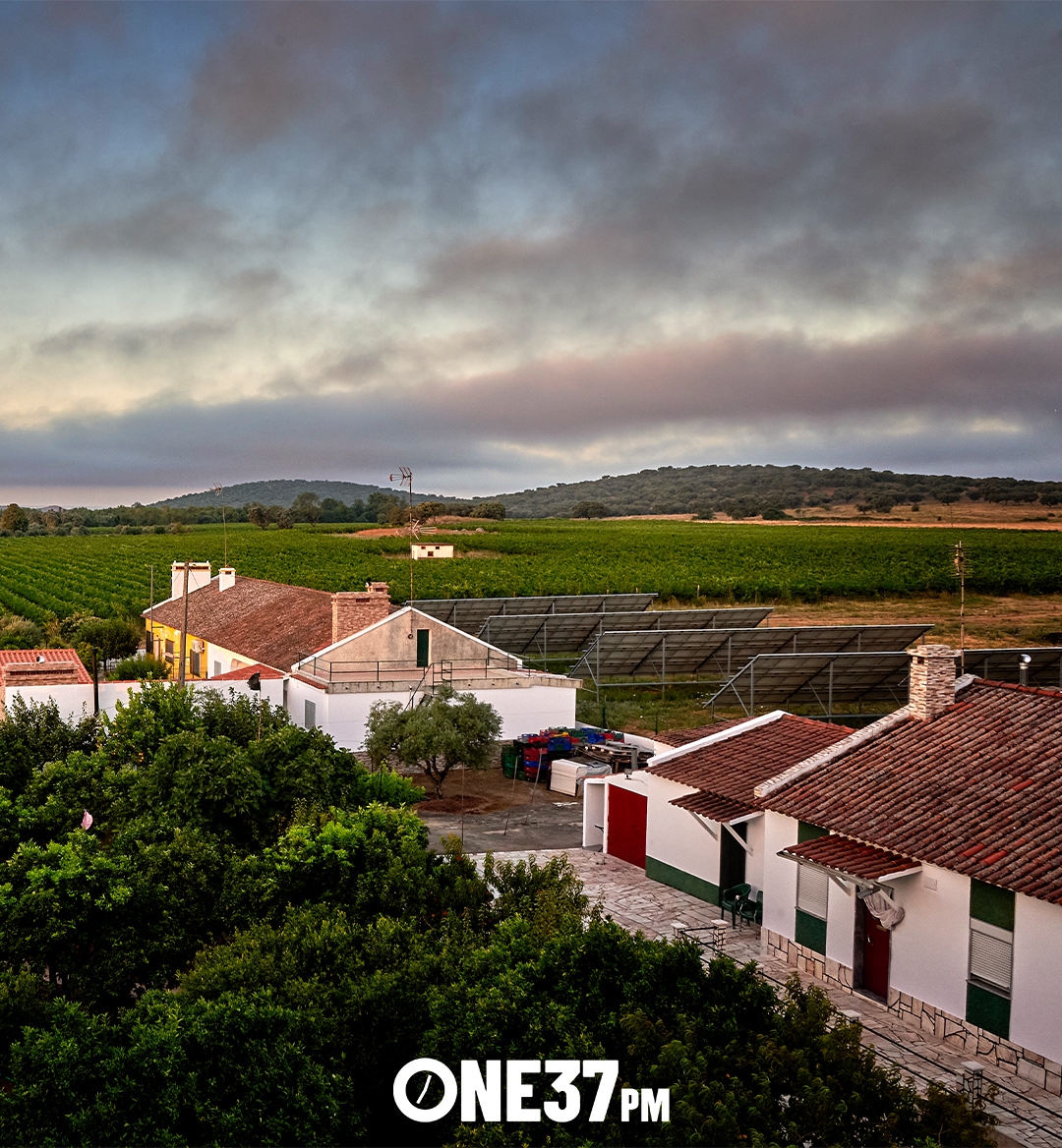 wine region to buy mobile